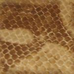 Snake Skin Seamless Texture