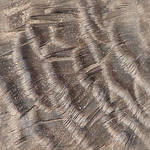Turkey Feather Texture Tile 1
