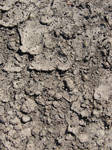 Cracked Earth Dirt Texture 02