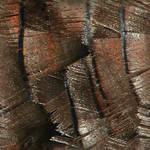 Turkey Feather Texture Tile 2