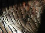 Turkey Feather Texture