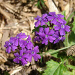 Miscellaneous Purple Flowers 2 by FantasyStock
