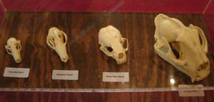 Various Animal Skulls 2
