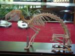 Rabbit Skeleton Bones