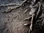 Scary-Looking Tree Roots 1 by FantasyStock