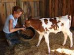 Danielle Feeding a Calf 03