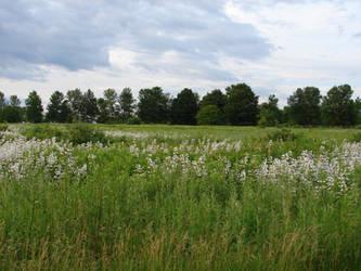 Nature Landscape Background 5 by FantasyStock