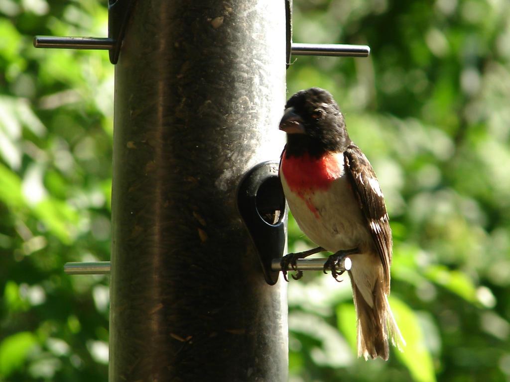 Little Bird at the Feeder 2 by FantasyStock on deviantART