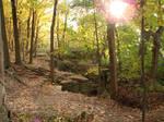 Autumn Forest Landscape 01