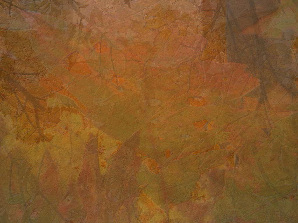 Pressed Leaves Texture 3 by FantasyStock