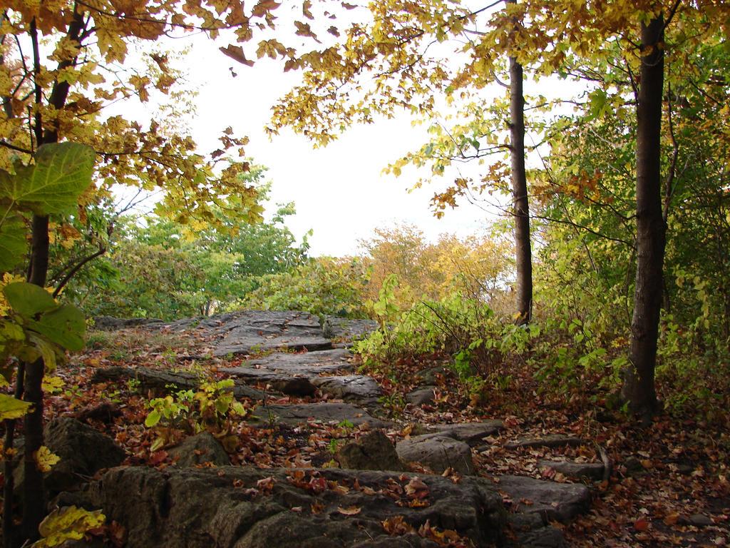 Autumn Forest Landscape 03 by FantasyStock on DeviantArt
