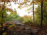 Autumn Forest Landscape 03