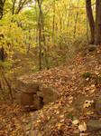 Autumn Forest Landscape 04