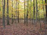 Autumn Forest Landscape 05