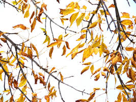 Golden Leaves of Autumn 1 by FantasyStock