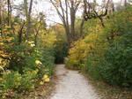 Autumn Forest Landscape 06