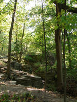 Rocky Forest Background 01 by FantasyStock