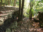Rocky Forest Background 08
