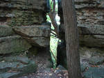 Rocky Forest Background 10