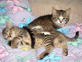 2 Snuggling Kittens v1