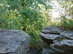 Rocky Forest Background 13