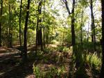 Woodland Trail Landscape 02