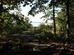 Rocky Forest Background 14