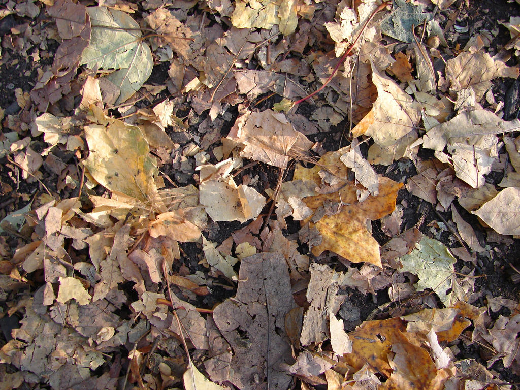 Fallen Autumn Leaves Texture 1 by FantasyStock
