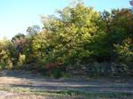 Rocky Forest Background 19