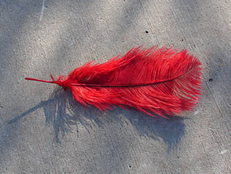 Red Ostrich Plume Feather by FantasyStock