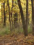 Autumn Forest Landscape 15