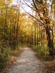 Autumn Forest Landscape 16