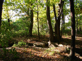 Woodland Trail Landscape 03 by FantasyStock