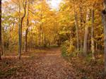 Autumn Forest Landscape 20