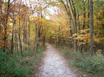 Autumn Forest Landscape 21