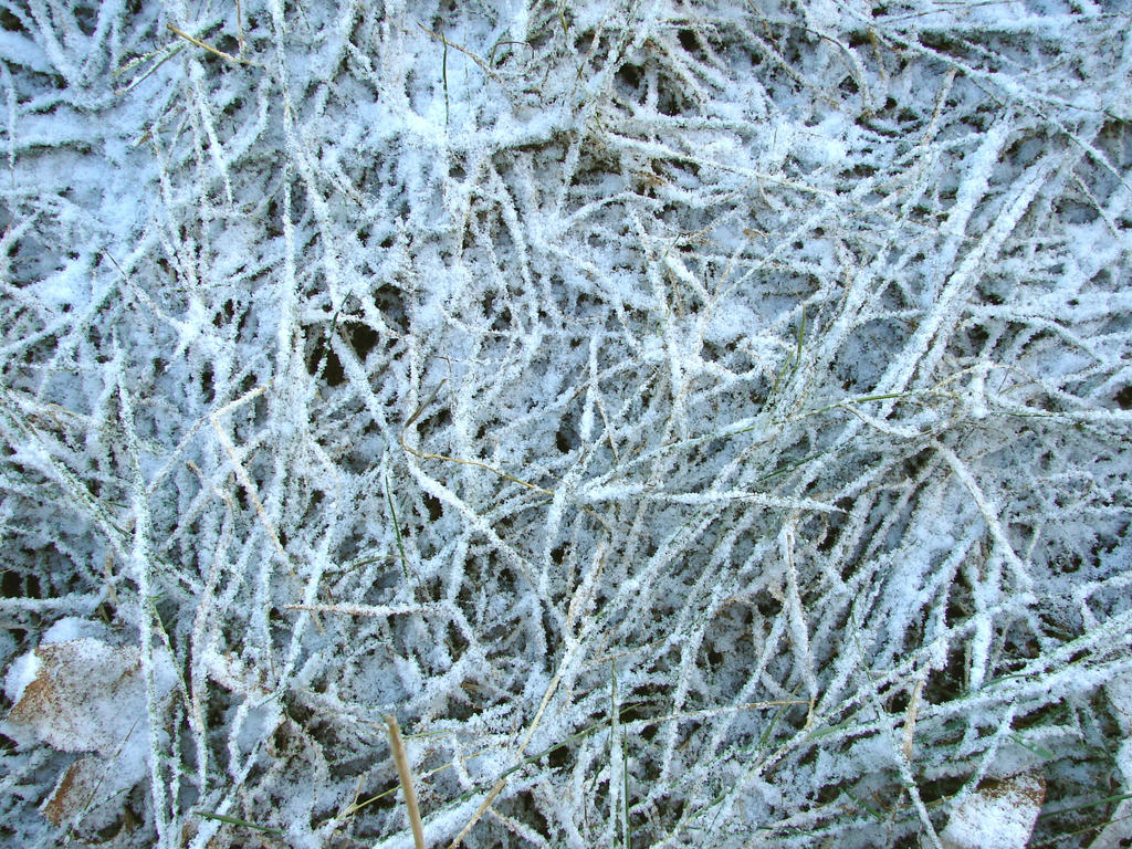 Frost Covered Grass Texture 1 by FantasyStock on DeviantArt