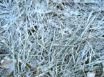 Frost Covered Grass Texture 1 by FantasyStock