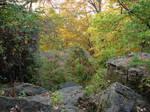 Autumn Forest Landscape 22