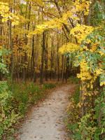 Woodland Trail Landscape 04 by FantasyStock