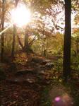 Rocky Forest Background 25
