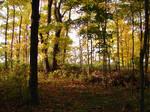 Woodland Trail Landscape 06