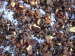 Autumn and Winter Texture