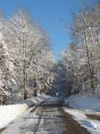 Wisconsin Woods Winter Road 4