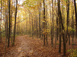 Woodland Trail Landscape 07 by FantasyStock