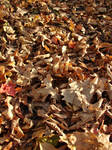Fallen Autumn Leaves Texture 2