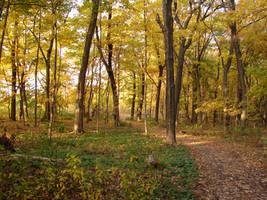 Woodland Trail Landscape 08 by FantasyStock