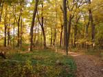 Woodland Trail Landscape 08