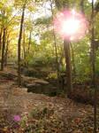 Rocky Forest Background 31