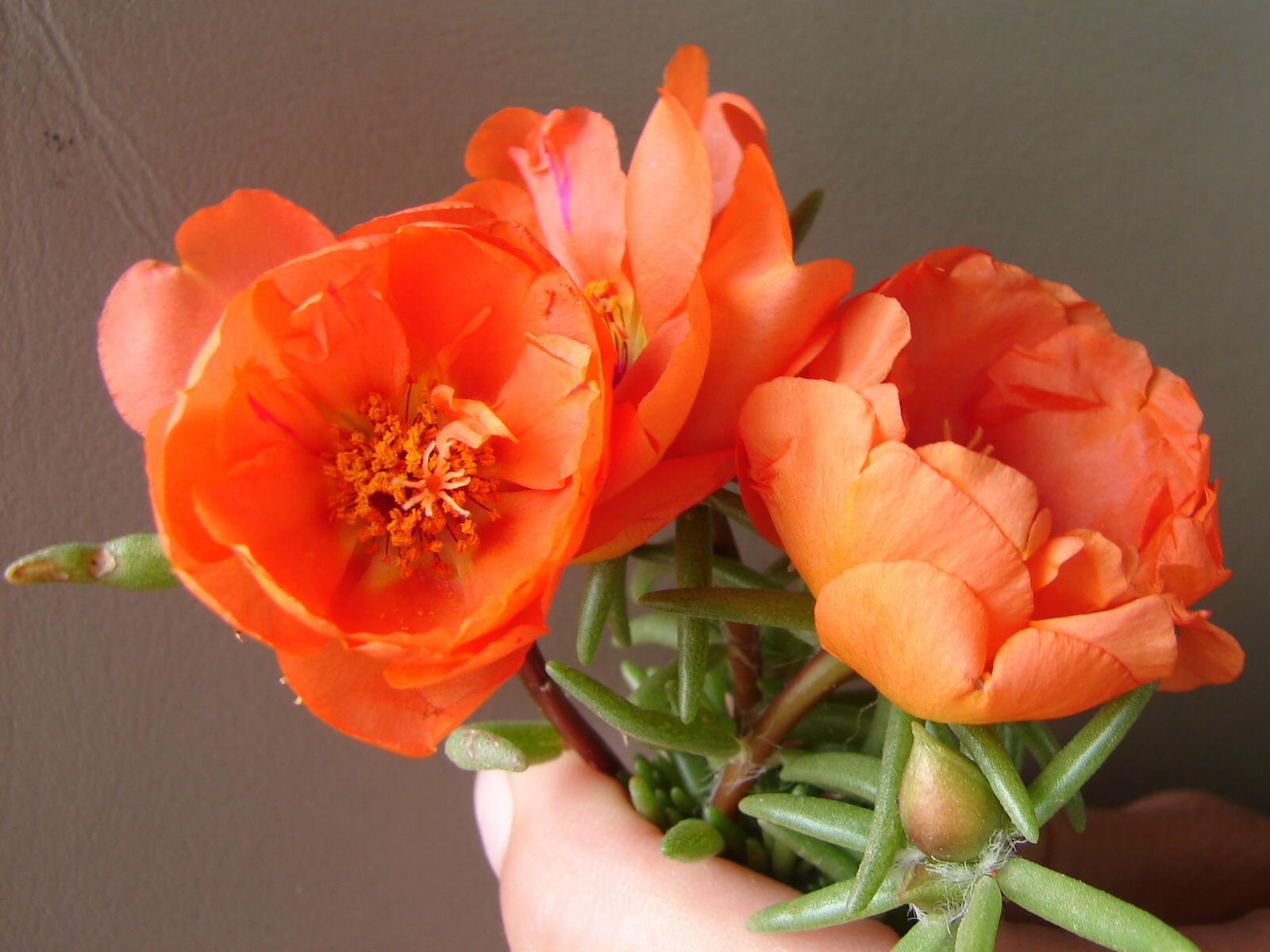 pretty orange flowers by fantasystock on deviantart, Beautiful flower