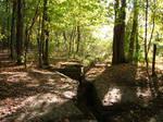 Rocky Forest Background 32